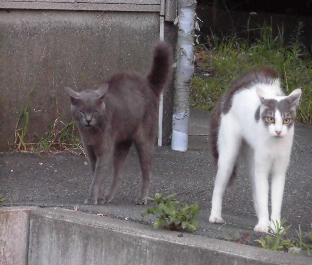 喧嘩早い猫: 三ツワランドの仲間...